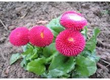 Blumenerde | Rindenmulch